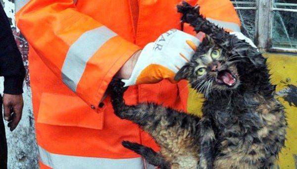 Кот, которого извлекли из моторного отсека автомобиля, теперь Интернет-звезда