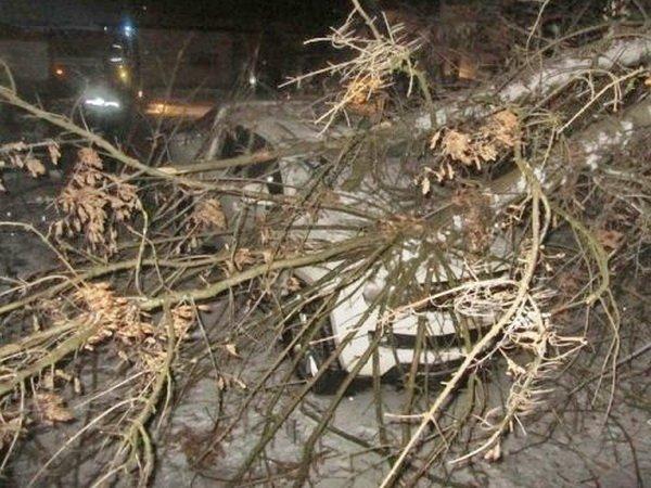Чаще автомобиль врезается в дерево, с Volkswagen Amarok произошло наоборот