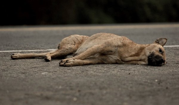 Большая собака спровоцировала серийную аварию в Минске на проспекте Независимости