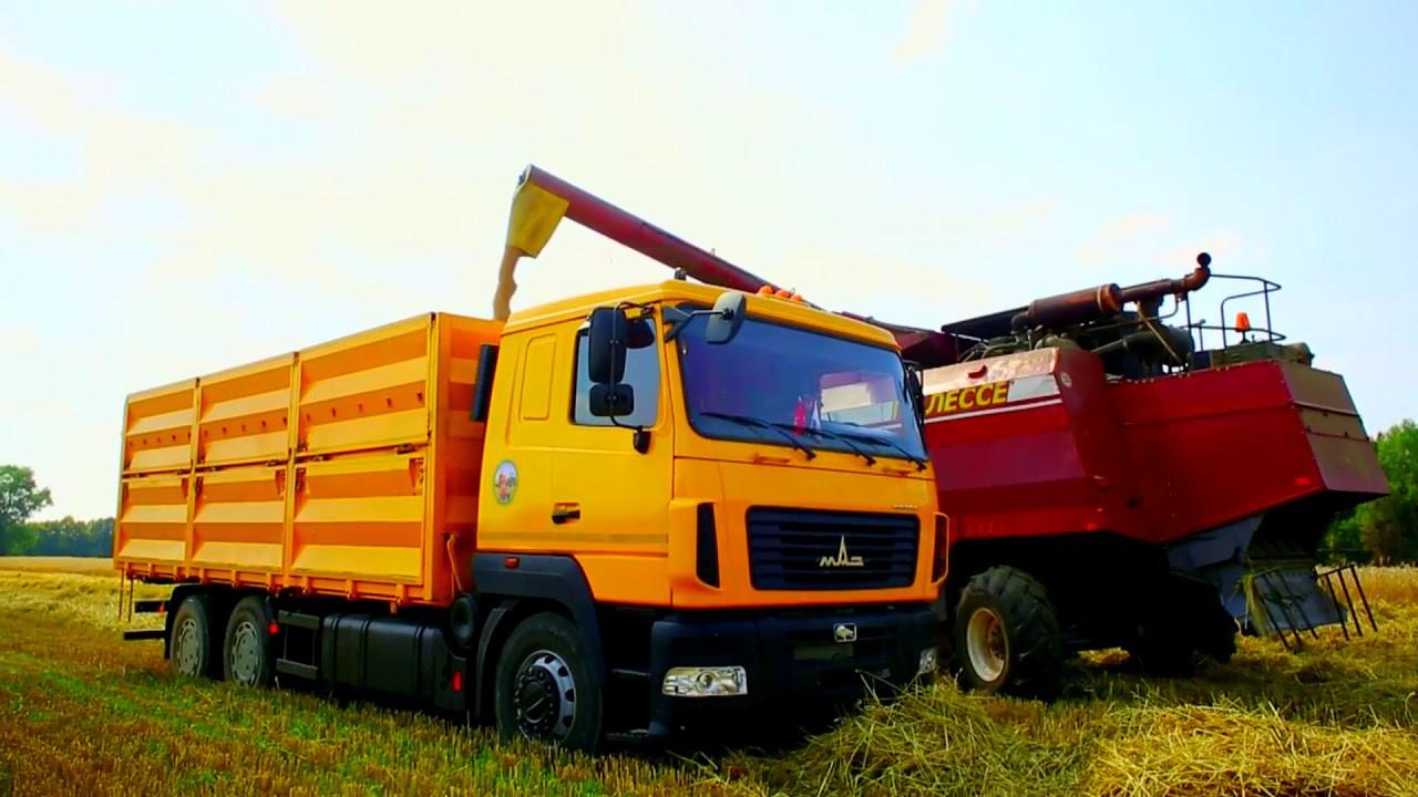 Видео: МАЗ выставил на обозрение один из самых больших зерновозов